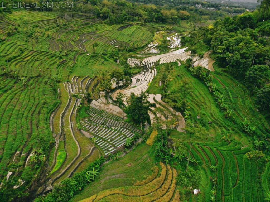 Beautiful landscapes of Terraced Ricefield in Selogriyo taken by a drone from above